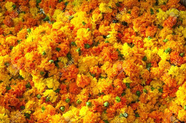 16274693-orange-Marigold-background-in-harmonic-pattern-Stock-Photo.jpg